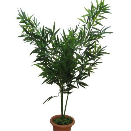 Бамбук малый