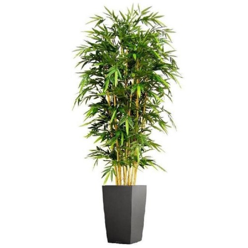 Бамбук 140 см.
