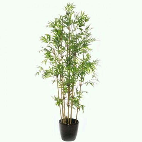 Бамбук 160 см.