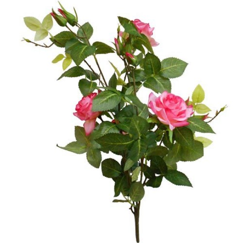 Роза горшечная Алиса