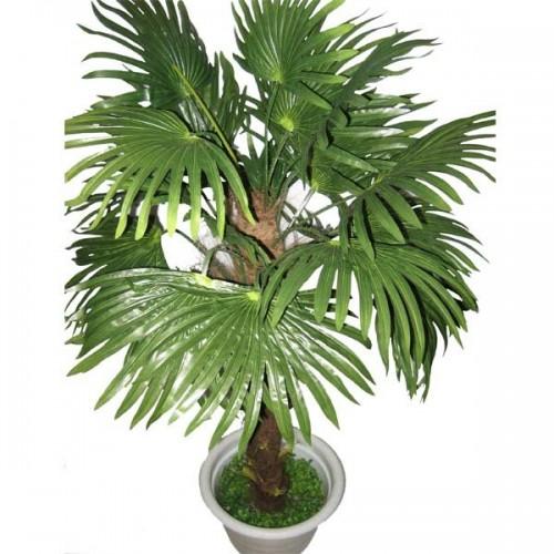 Пальма финиковая 22 листа