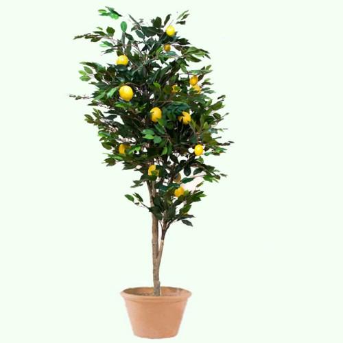Лимон 160 см